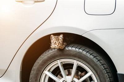 タイヤの上に子猫  03-06-02