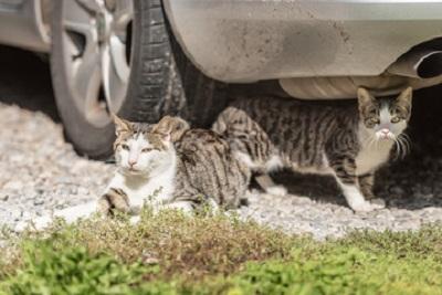 車体の下にいるネコ 03-06-03